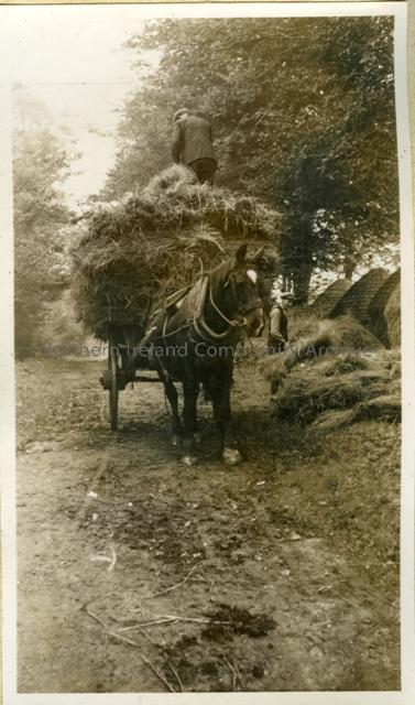 Horse carrying raw flax 1937
