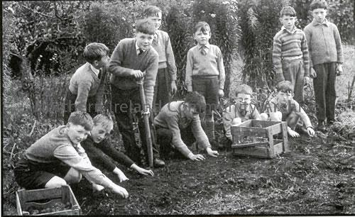 Pupils of Largy Primary School working in the school garden, taken for an article in the Coleraine Chronicle, 1962 (2593)